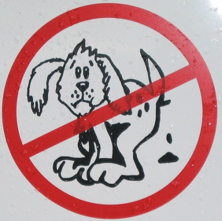 Doggy Don't: Not on our Streets!