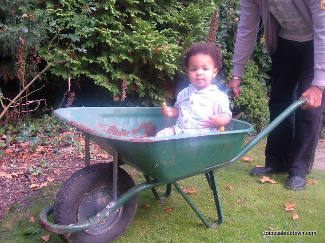 Ezra-in-wheelbarrow