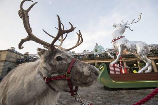 Reindeer in Covent Garden