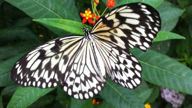 London Zoo Butterflies