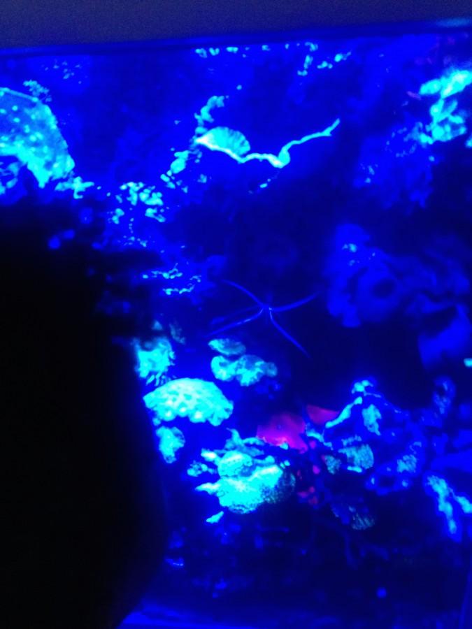 Horniman museum fish tank
