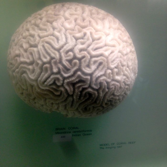 Horniman Museum brain walk