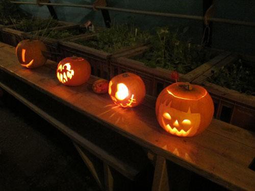 Pumpkins at King's Cross
