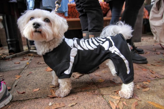 Halloween Dog Walk by @Dogbunch