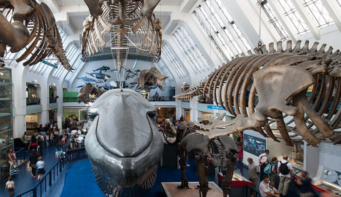 Whales Natural History Museum