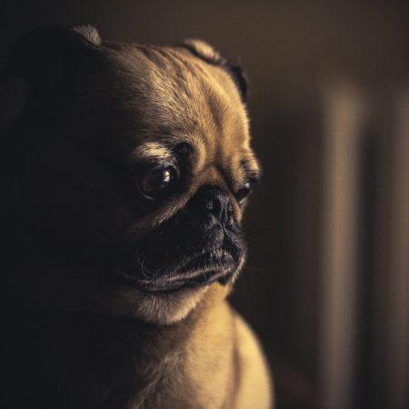 Sad cute puppy