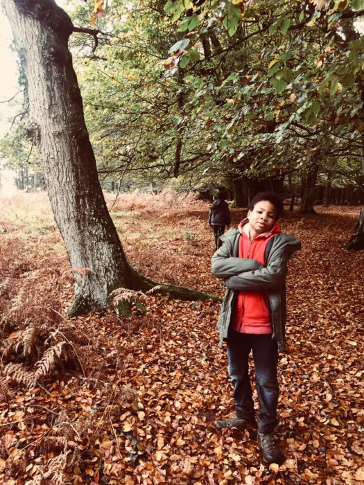 Autumn strolls in the New Forest