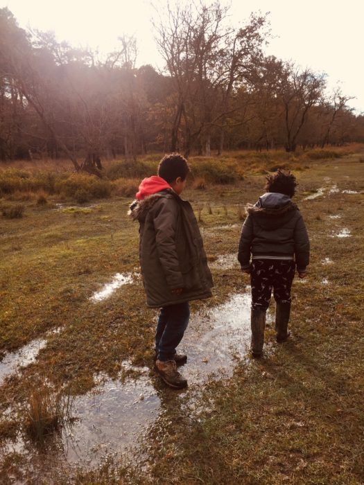 New Forest stroll