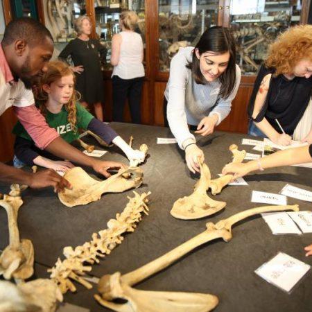 Grant Museum of Zoology - Explore Zoology