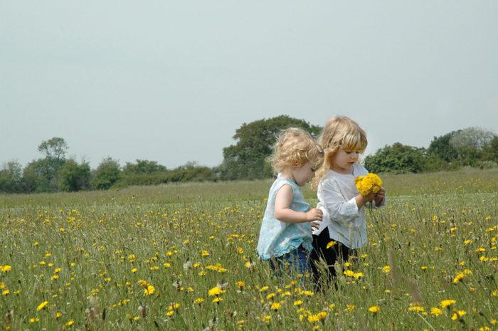Great British Wildflower Hunt photo by Nicola Acketts
