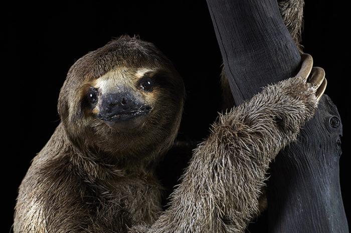 sloth - Life in the Dark