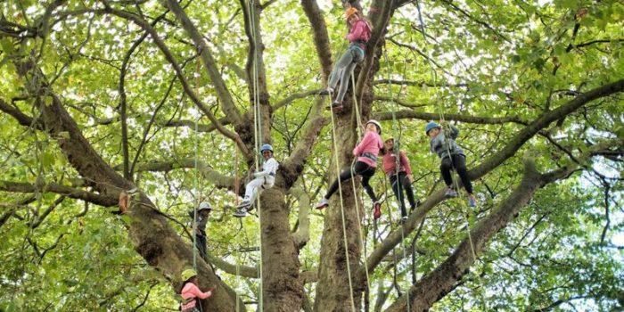 Giant climbing concert
