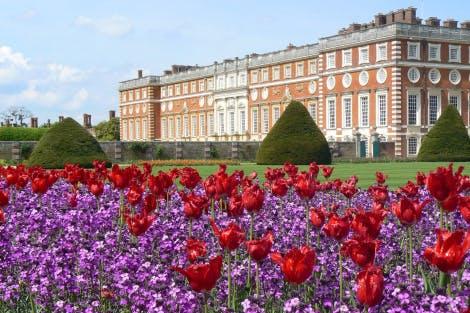 Tulip festival Hampton Court Palace